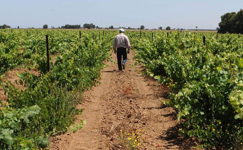 Marruecos, principal proveedor de frutas y hortalizas deEspaña